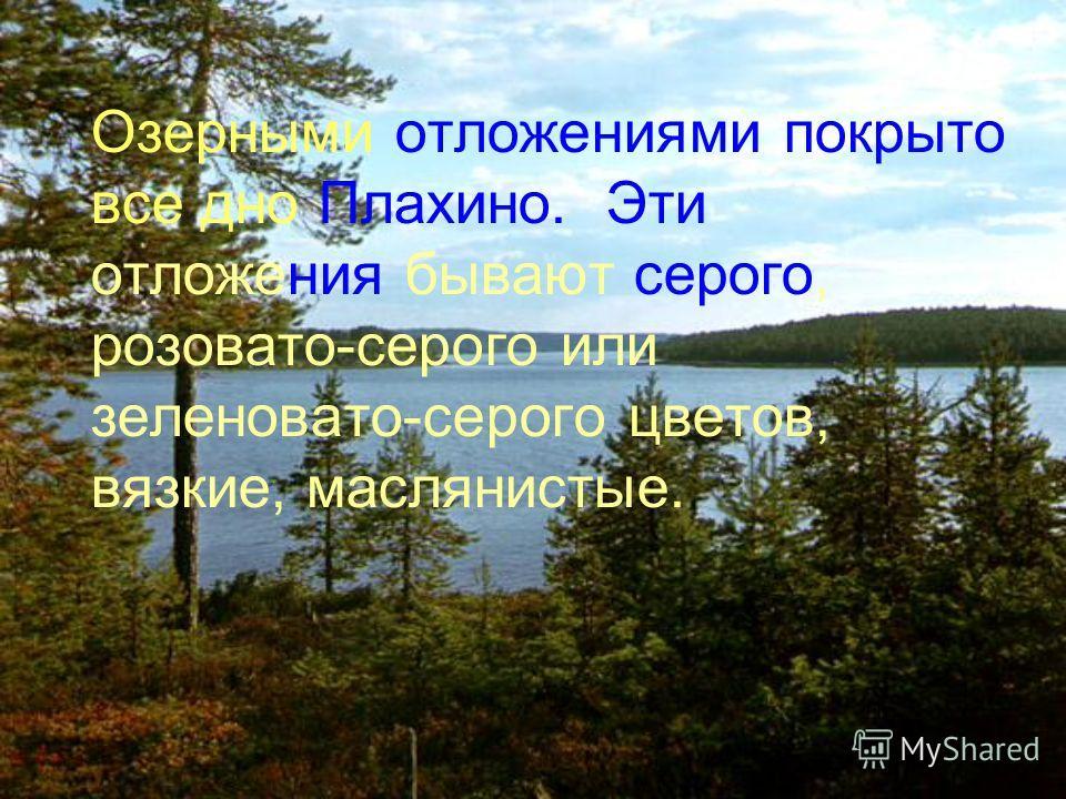 Озерными отложениями покрыто все дно Плахино. Эти отложения бывают серого, розовато-серого или зеленовато-серого цветов, вязкие, маслянистые.