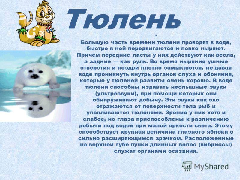 Тюлень Тюлени хорошо приспособлены к водному образу жизни и перенесению низких температур. Их веретенообразное тело имеет обтекаемые контуры без выступов, так как лишенная ушных раковин голова совершенно гладкая, а короткая шея между ней и туловищем