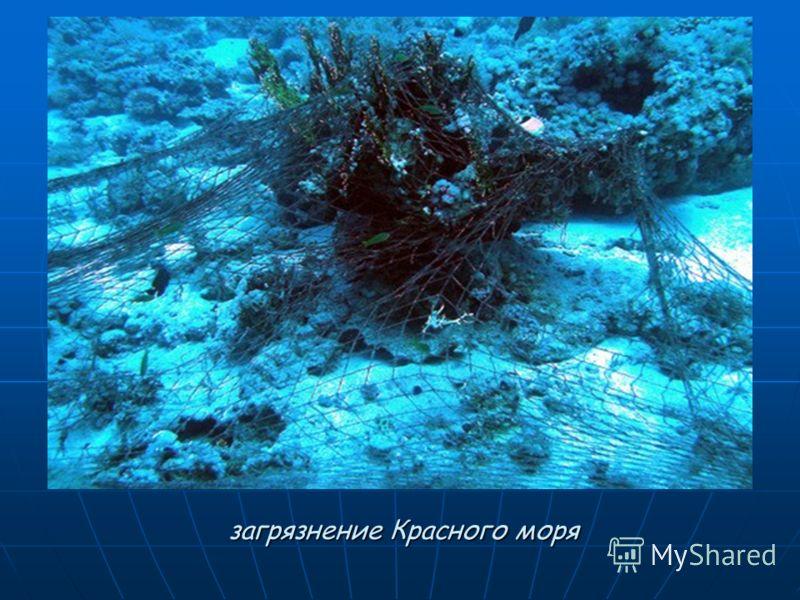загрязнение Красного моря