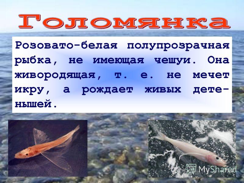 Розовато-белая полупрозрачная рыбка, не имеющая чешуи. Она живородящая, т. е. не мечет икру, а рождает живых дете- нышей.