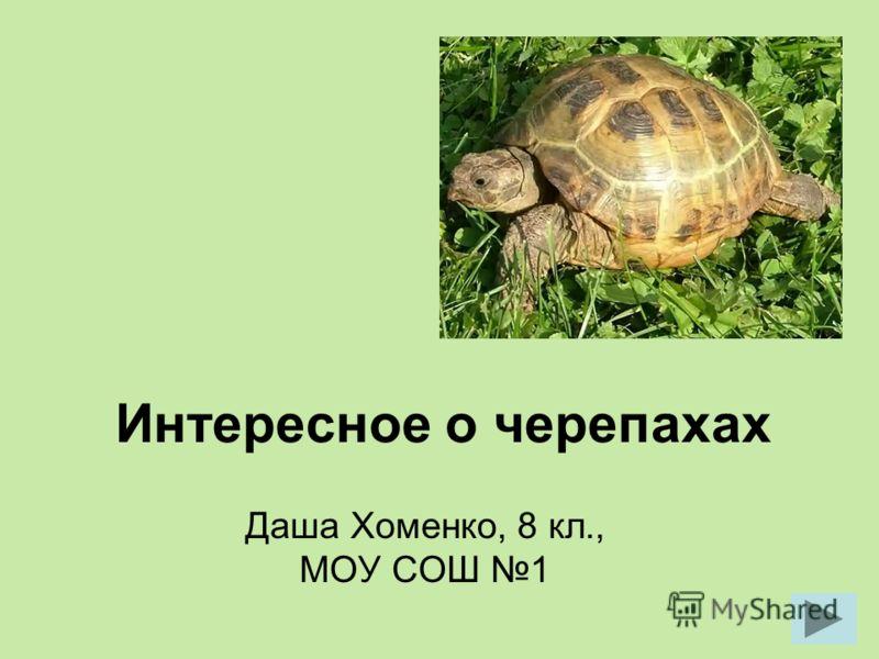 Интересное о черепахах Даша Хоменко, 8 кл., МОУ СОШ 1
