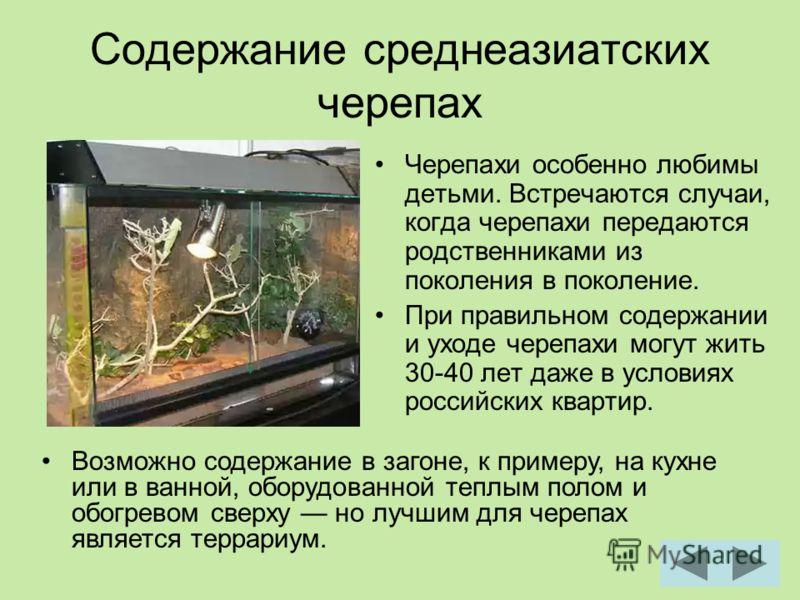 Содержание среднеазиатских черепах Черепахи особенно любимы детьми. Встречаются случаи, когда черепахи передаются родственниками из поколения в поколение. При правильном содержании и уходе черепахи могут жить 30-40 лет даже в условиях российских квар
