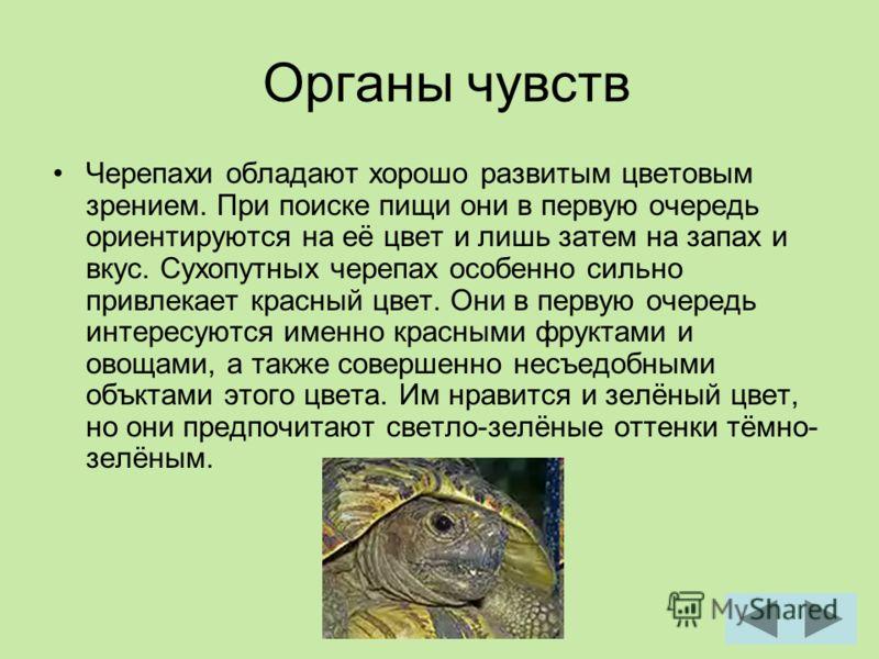 Органы чувств Черепахи обладают хорошо развитым цветовым зрением. При поиске пищи они в первую очередь ориентируются на её цвет и лишь затем на запах и вкус. Сухопутных черепах особенно сильно привлекает красный цвет. Они в первую очередь интересуютс