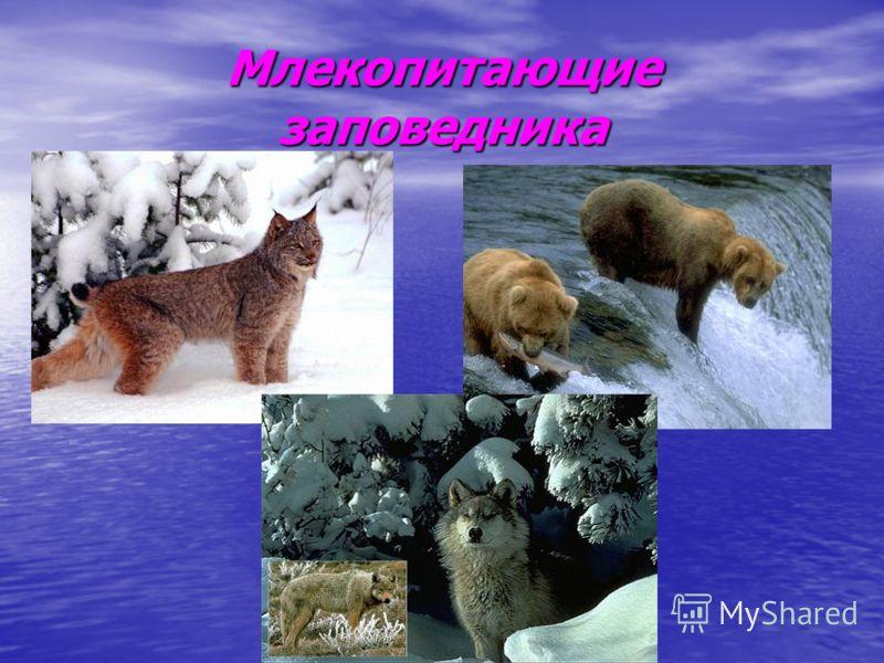 Млекопитающие заповедника