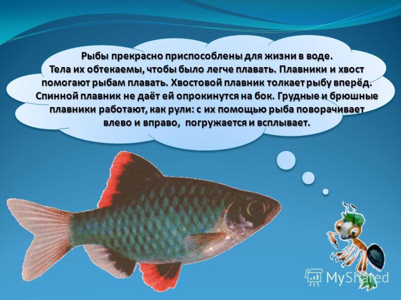 Рыбы прекрасно приспособлены для жизни в воде. Тела их обтекаемы, чтобы было легче плавать. Плавники и хвост помогают рыбам плавать. Хвостовой плавник толкает рыбу вперёд. Спинной плавник не даёт ей опрокинутся на бок. Грудные и брюшные плавники рабо