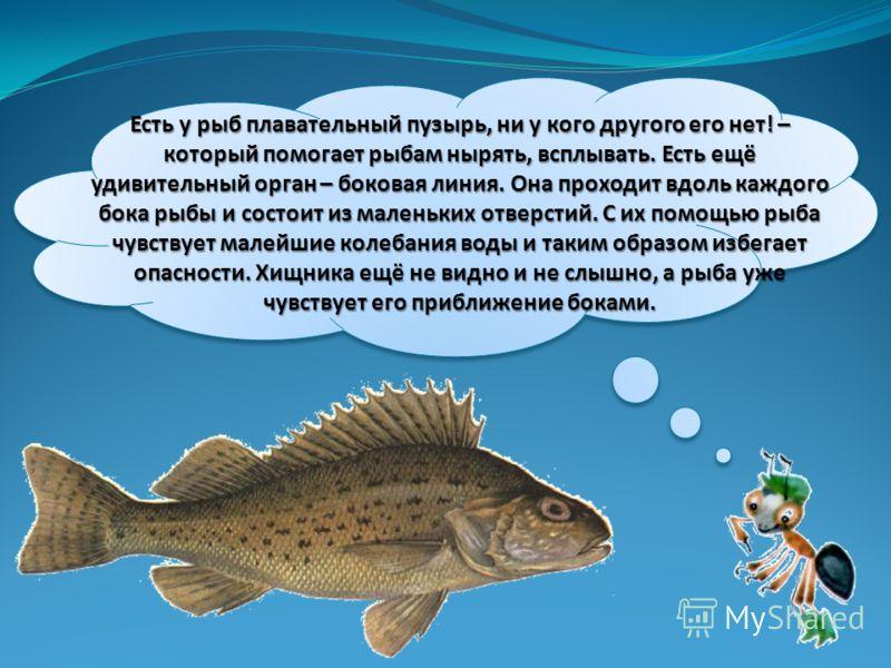 Есть у рыб плавательный пузырь, ни у кого другого его нет! – который помогает рыбам нырять, всплывать. Есть ещё удивительный орган – боковая линия. Она проходит вдоль каждого бока рыбы и состоит из маленьких отверстий. С их помощью рыба чувствует мал