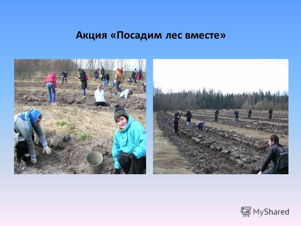 Акция «Посадим лес вместе»