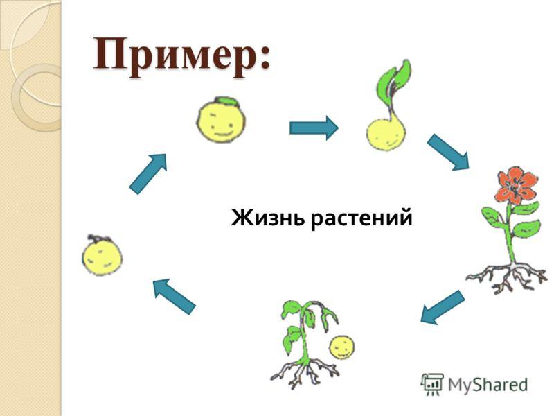 Пример: Жизнь растений