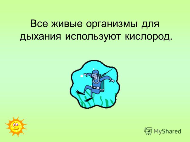 Все живые организмы для дыхания используют кислород.