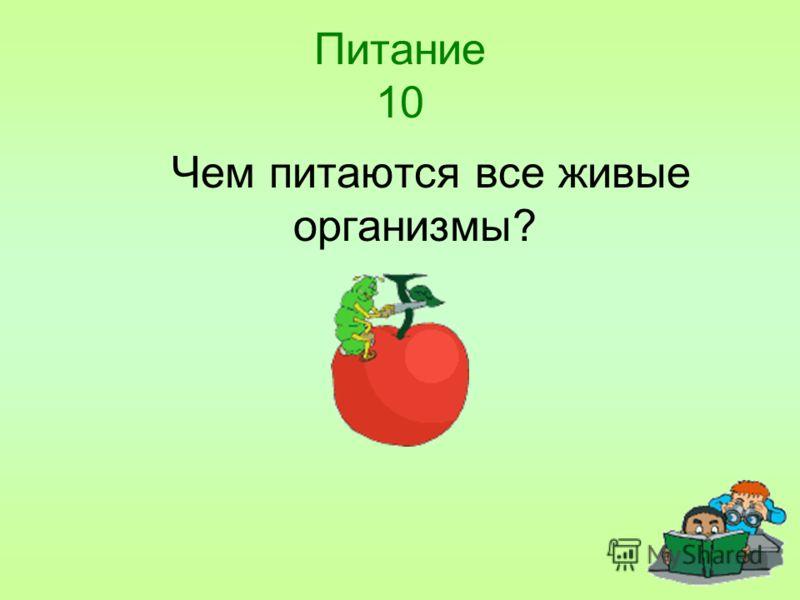 Питание 10 Чем питаются все живые организмы?