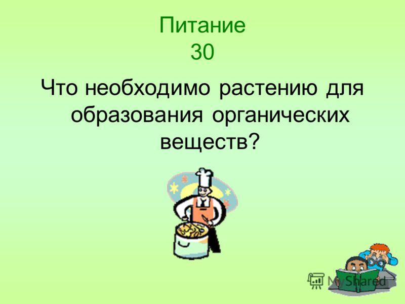 Питание 30 Что необходимо растению для образования органических веществ?