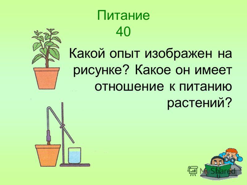 Питание 40 Какой опыт изображен на рисунке? Какое он имеет отношение к питанию растений?