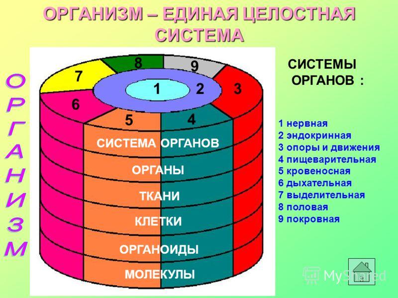 ОРГАНИЗМ – ЕДИНАЯ ЦЕЛОСТНАЯ СИСТЕМА МОЛЕКУЛЫ ОРГАНОИДЫ КЛЕТКИ ТКАНИ ОРГАНЫ СИСТЕМА ОРГАНОВ 123 4 5 6 7 8 9 1 нервная 2 эндокринная 3 опоры и движения 4 пищеварительная 5 кровеносная 6 дыхательная 7 выделительная 8 половая 9 покровная СИСТЕМЫ ОРГАНОВ