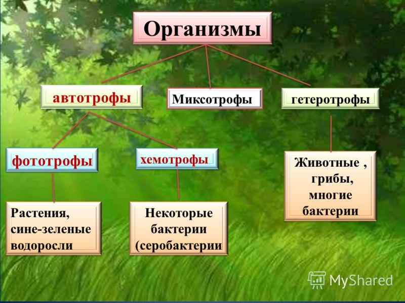 Организмы автотрофы фототрофы хемотрофы гетеротрофыРастения, сине-зеленые водоросли Некоторые бактерии (серобактерии Животные, грибы, многие бактерии Миксотрофы