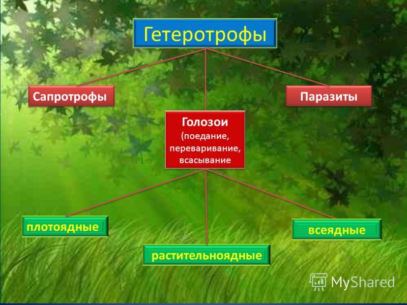 Гетеротрофы СапротрофыПаразитыГолозои (поедание, переваривание, всасывание плотоядные растительноядные всеядные