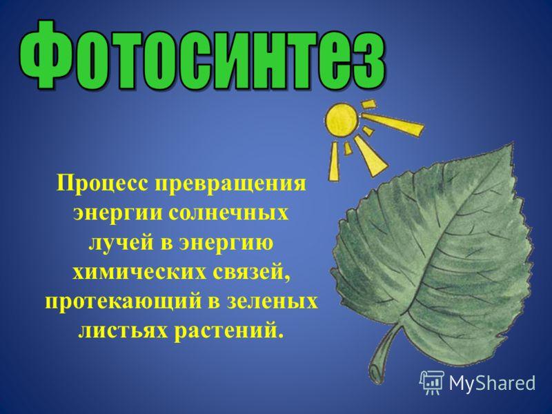 Процесс превращения энергии солнечных лучей в энергию химических связей, протекающий в зеленых листьях растений.