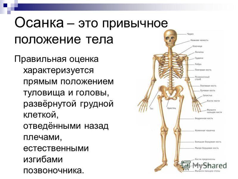 Осанка – это привычное положение тела Правильная оценка характеризуется прямым положением туловища и головы, развёрнутой грудной клеткой, отведёнными назад плечами, естественными изгибами позвоночника.