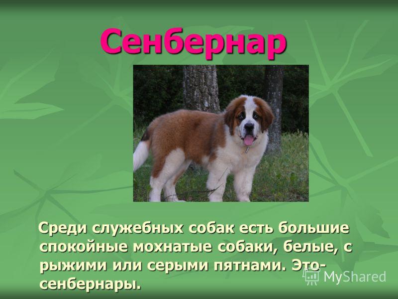 Ротвейлер Ротвейлеры - служебная порода собак. Это смелая, спокойная, уверенная в себе собака. Ротвейлеры умны, хорошо дрессируются. У них врожденный охранный инстинкт. Ротвейлеры - служебная порода собак. Это смелая, спокойная, уверенная в себе соба