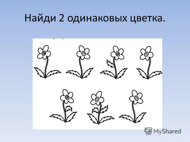 Найди 2 одинаковых цветка.