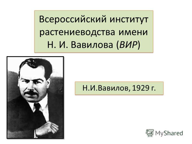 Всероссийский институт растениевoдства имени Н. И. Вавилова (ВИР) Н.И.Вавилов, 1929 г.