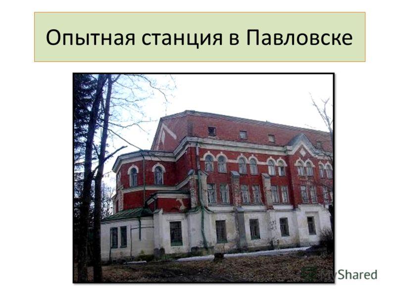 Опытная станция в Павловске