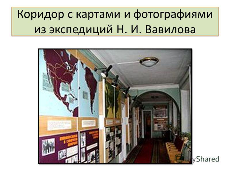 Коридор с картами и фотографиями из экспедиций Н. И. Вавилова