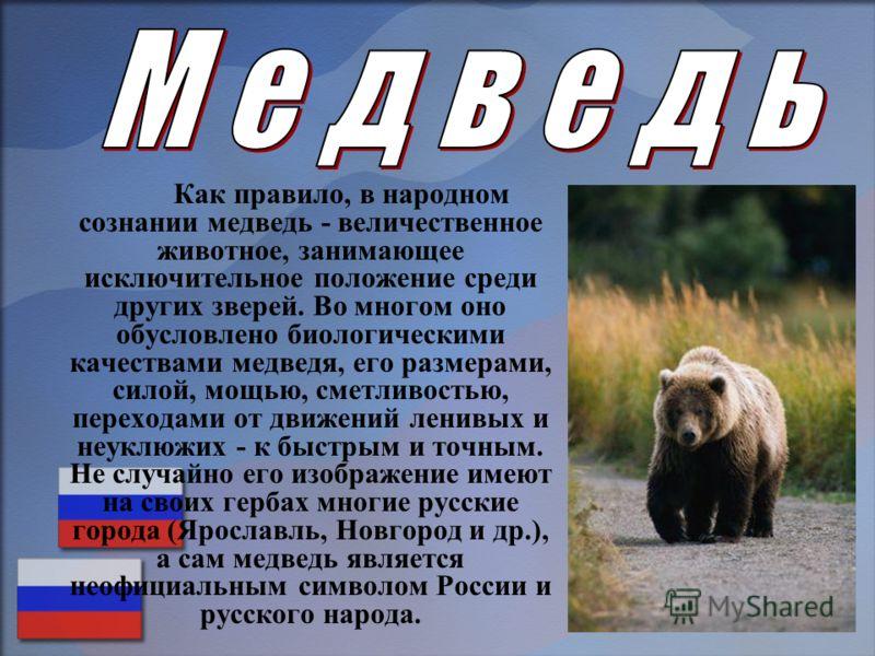 Как правило, в народном сознании медведь - величественное животное, занимающее исключительное положение среди других зверей. Во многом оно обусловлено биологическими качествами медведя, его размерами, силой, мощью, сметливостью, переходами от движени