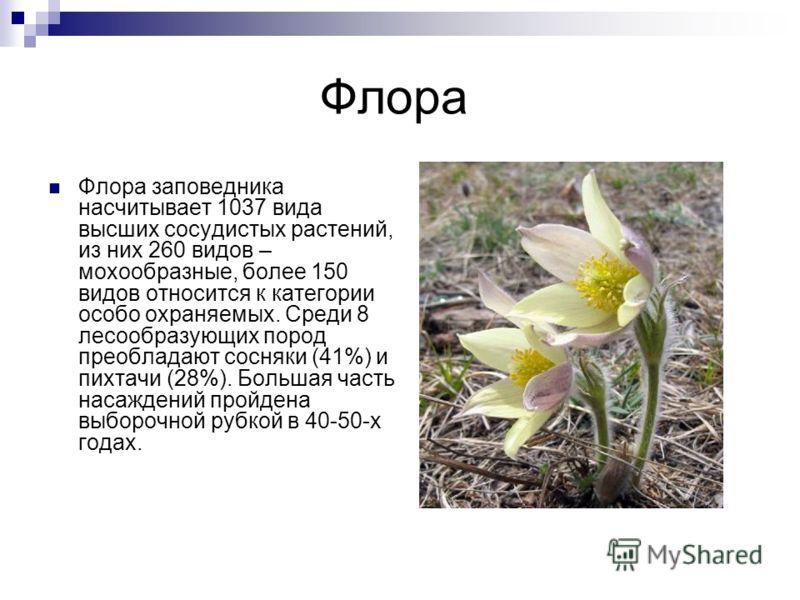 Флора Флора заповедника насчитывает 1037 вида высших сосудистых растений, из них 260 видов – мохообразные, более 150 видов относится к категории особо охраняемых. Среди 8 лесообразующих пород преобладают сосняки (41%) и пихтачи (28%). Большая часть н