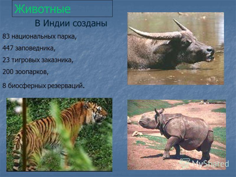 Животные В Индии созданы 83 национальных парка, 447 заповедника, 23 тигровых заказника, 200 зоопарков, 8 биосферных резерваций.