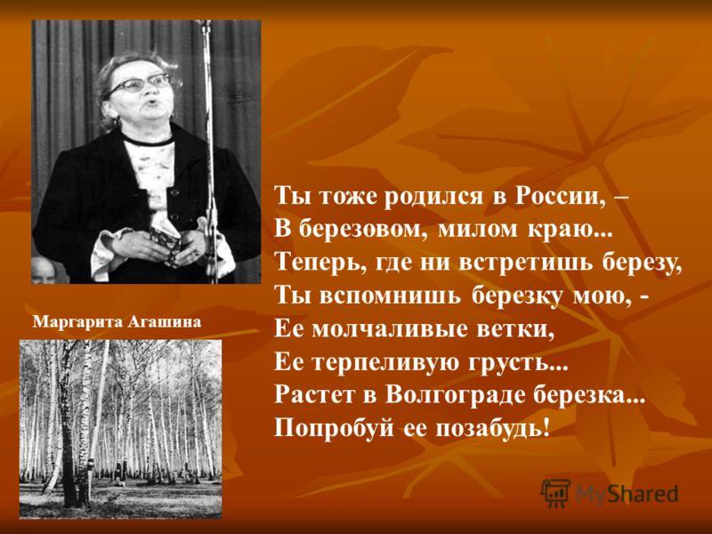 Ты тоже родился в России, – В березовом, милом краю... Теперь, где ни встретишь березу, Ты вспомнишь березку мою, - Ее молчаливые ветки, Ее терпеливую грусть... Растет в Волгограде березка... Попробуй ее позабудь! Маргарита Агашина