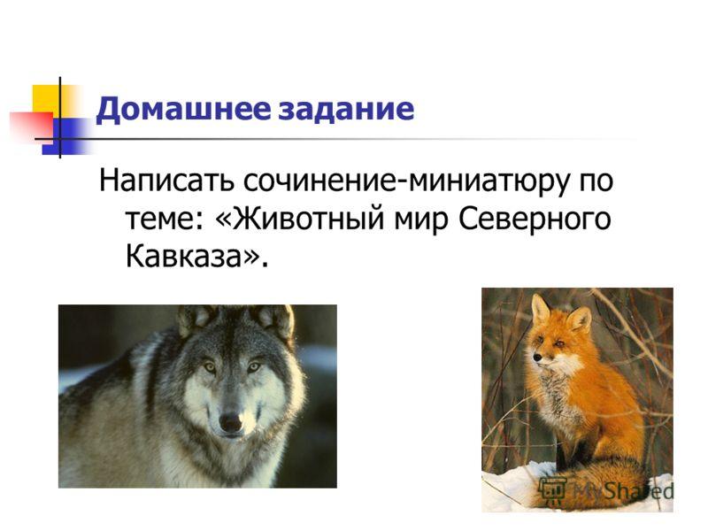Домашнее задание Написать сочинение-миниатюру по теме: «Животный мир Северного Кавказа».
