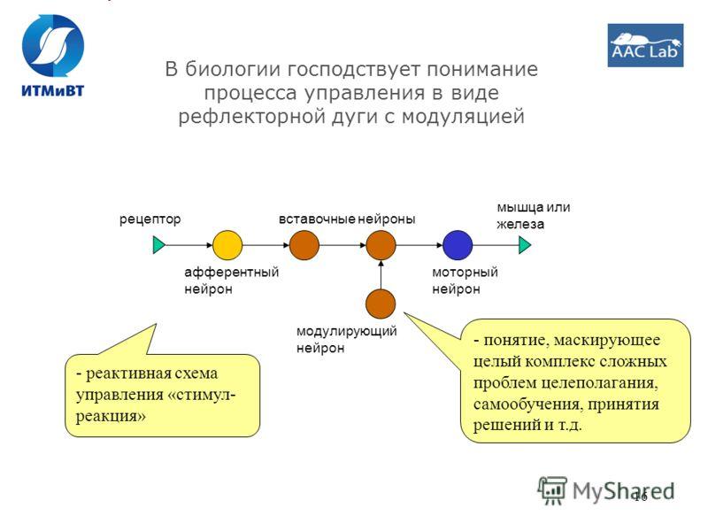 16 В биологии господствует понимание процесса управления в виде рефлекторной дуги с модуляцией афферентный нейрон моторный нейрон вставочные нейроны модулирующий нейрон рецептор мышца или железа - понятие, маскирующее целый комплекс сложных проблем ц