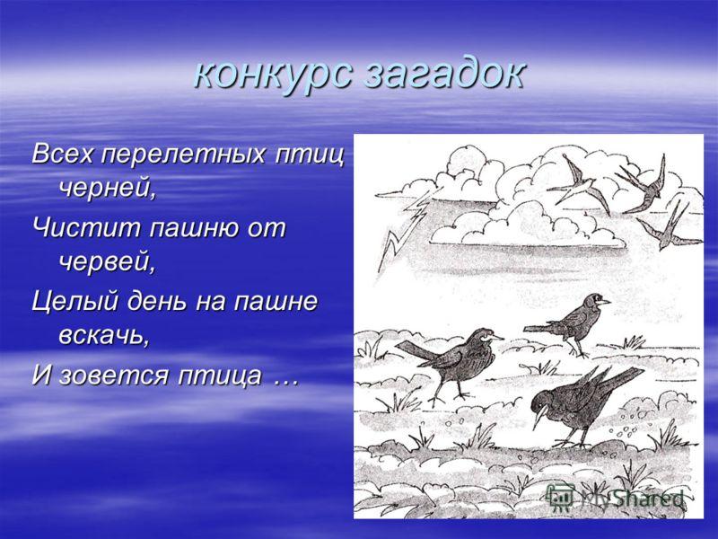 конкурс загадок Всех перелетных птиц черней, Чистит пашню от червей, Целый день на пашне вскачь, И зовется птица …