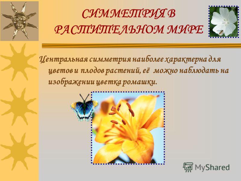 СИММЕТРИЯ В РАСТИТЕЛЬНОМ МИРЕ Центральная симметрия наиболее характерна для цветов и плодов растений, её можно наблюдать на изображении цветка ромашки.