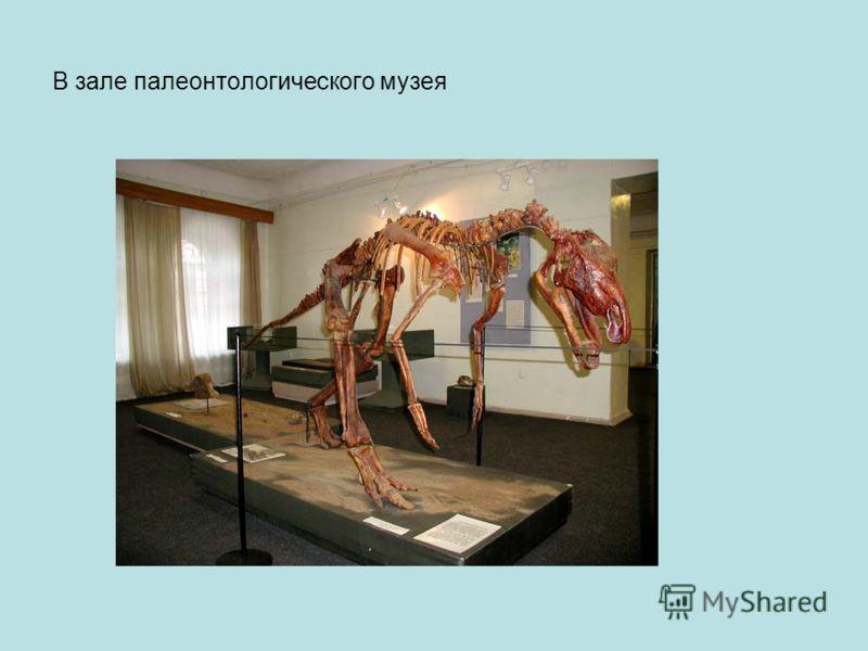 В зале палеонтологического музея