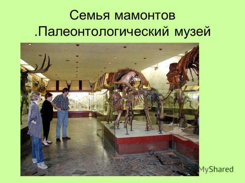 Семья мамонтов.Палеонтологический музей