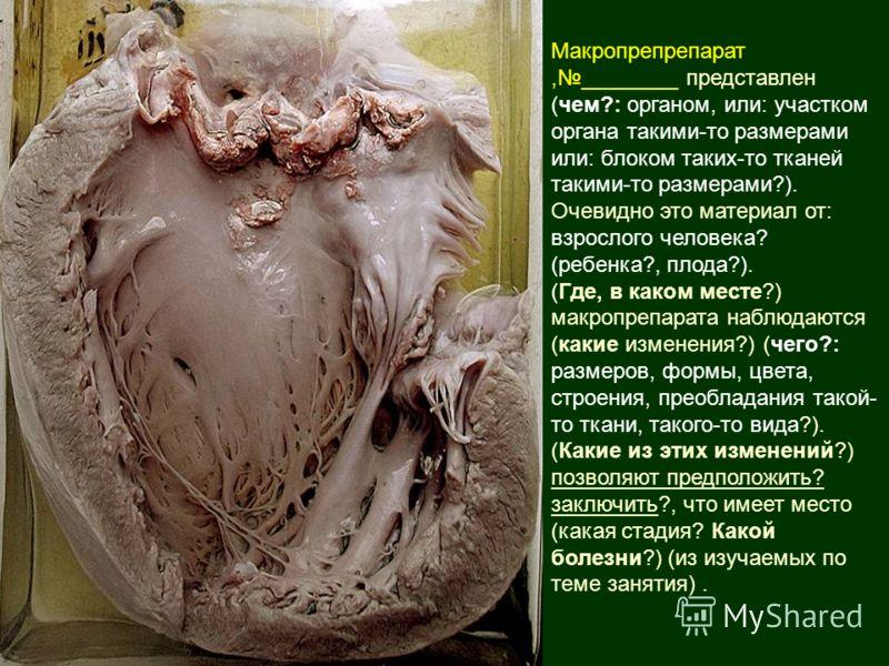Макропрепрепарат,________ представлен (чем?: органом, или: участком органа такими-то размерами или: блоком таких-то тканей такими-то размерами?). Очевидно это материал от: взрослого человека? (ребенка?, плода?). (Где, в каком месте?) макропрепарата н