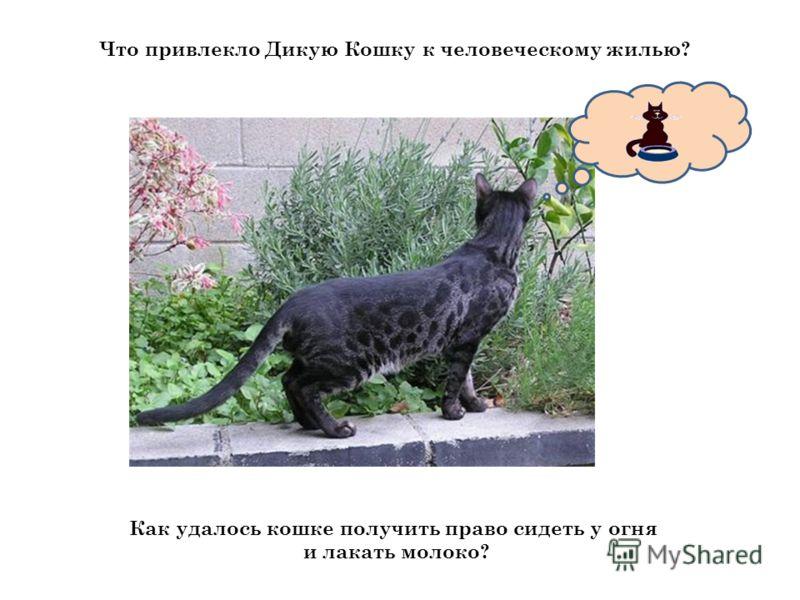 Что привлекло Дикую Кошку к человеческому жилью? Как удалось кошке получить право сидеть у огня и лакать молоко?