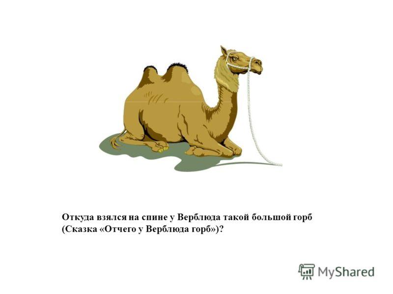 Откуда взялся на спине у Верблюда такой большой горб (Сказка «Отчего у Верблюда горб»)?