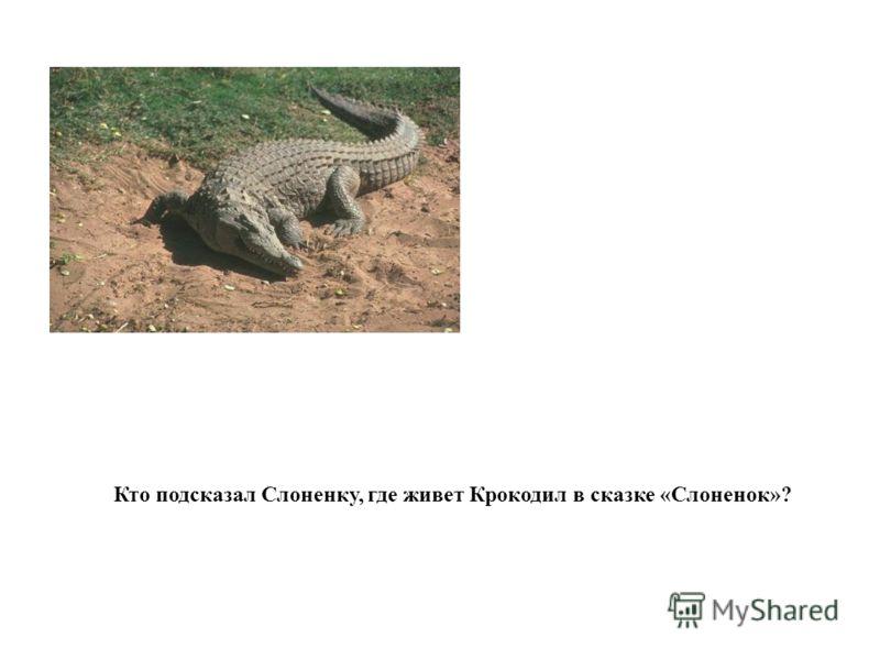 Кто подсказал Слоненку, где живет Крокодил в сказке «Слоненок»?