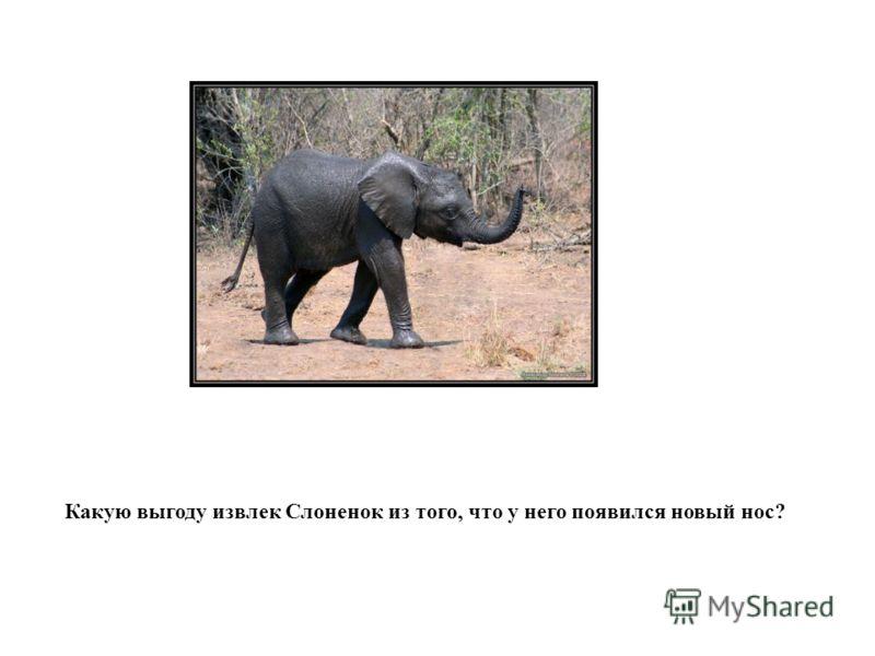 Какую выгоду извлек Слоненок из того, что у него появился новый нос?