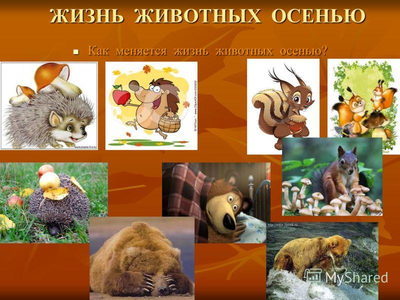 ЖИЗНЬ ЖИВОТНЫХ ОСЕНЬЮ ЖИЗНЬ ЖИВОТНЫХ ОСЕНЬЮ Как меняется жизнь животных осенью? Как меняется жизнь животных осенью?