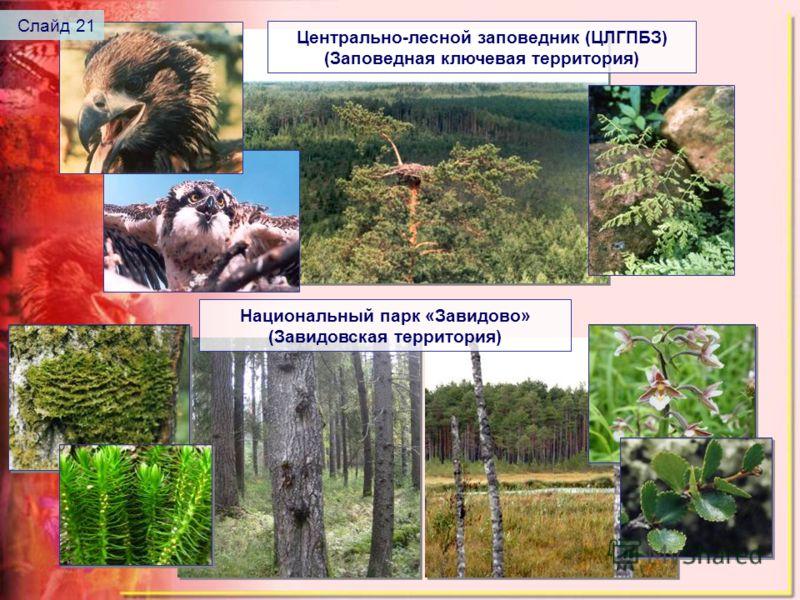 Центрально-лесной заповедник (ЦЛГПБЗ) (Заповедная ключевая территория) Национальный парк «Завидово» (Завидовская территория) Слайд 21