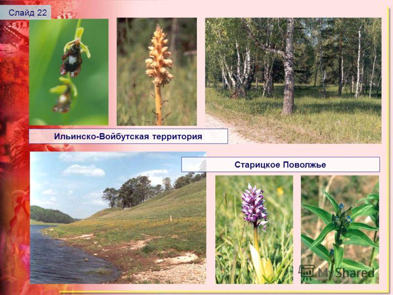 Ильинско-Войбутская территория Старицкое Поволжье Слайд 22