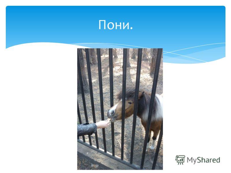 Пони.