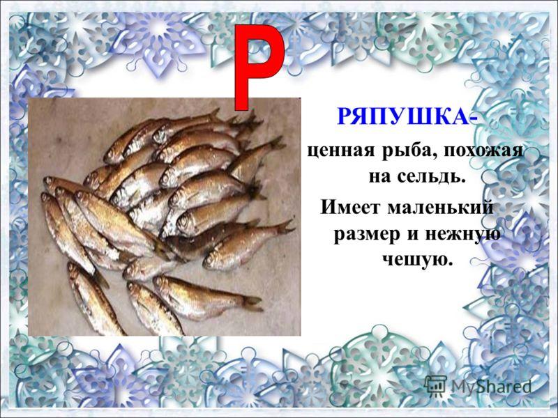 РЯПУШКА- ценная рыба, похожая на сельдь. Имеет маленький размер и нежную чешую.