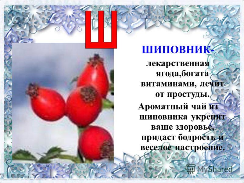 ШИПОВНИК- лекарственная ягода,богата витаминами, лечит от простуды. Ароматный чай из шиповника укрепит ваше здоровье, придаст бодрость и веселое настроение.