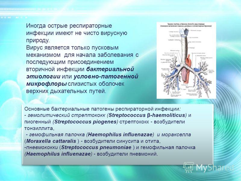Основные бактериальные патогены респираторной инфекции: - гемолитический стрептококк (Streptococcus β-haemoliticus) и пиогенный (Streptococcus piogenes) стрептококк - возбудители тонзиллита, - гемофильная палочка (Haemophilus influenazae) и моракселл