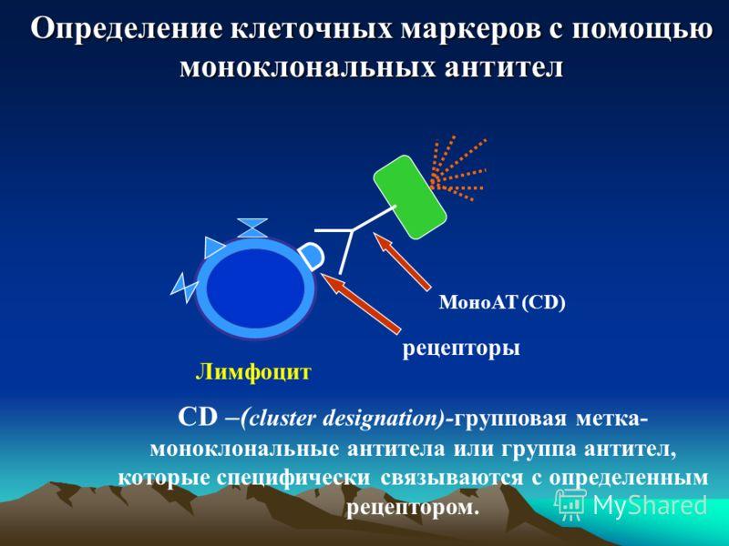 Определение клеточных маркеров с помощью моноклональных антител рецепторы МоноАТ (CD) Лимфоцит CD –( cluster designation)-групповая метка- моноклональные антитела или группа антител, которые специфически связываются с определенным рецептором.
