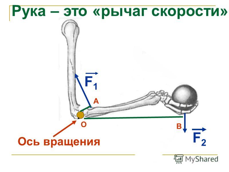 Ось вращения F1F1 F2F2 Рука – это «рычаг скорости» О В А